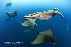 SM 1-AM-1-David Salvatori