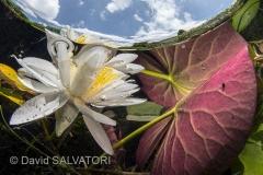 SM 1-TH-1-David Salvatori